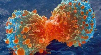 Τι Είναι ο Καρκίνος; Τι τον Προκαλεί;